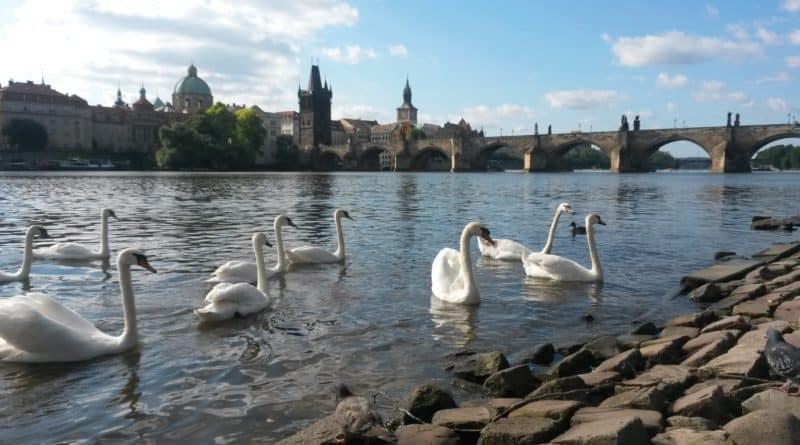 Zdarma v Praze